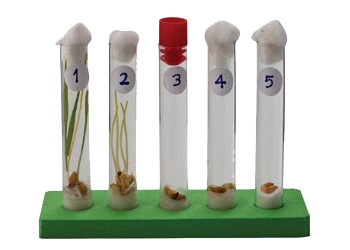Controlled Germination Experiment Set